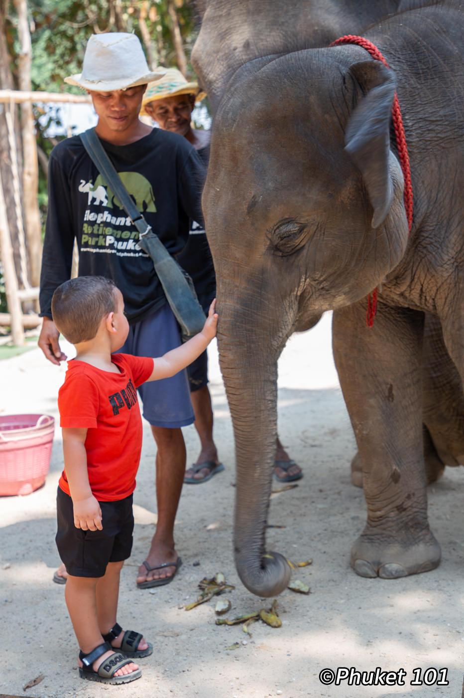baby-elephant-phuket