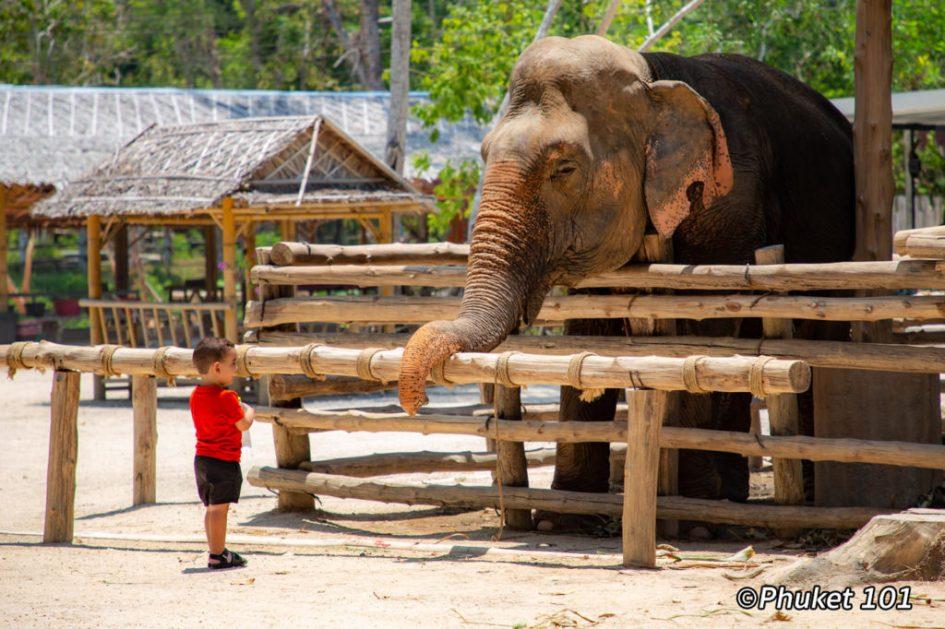Elephant Camps in Phuket