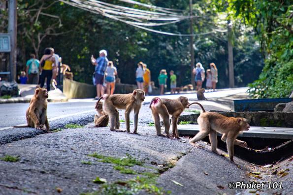 monkeys-hill-phuket-3