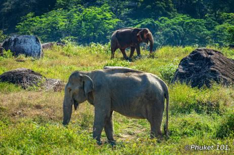 tree-tops-elephants-1