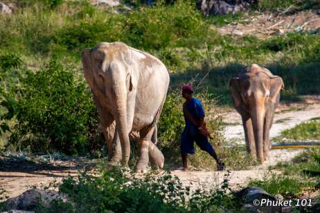 tree-tops-elephants-5