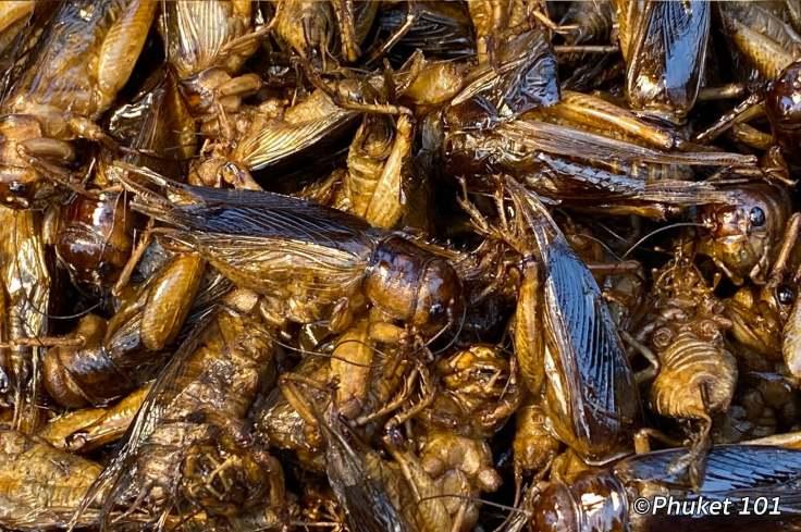kor-jaan-night-market-crickets