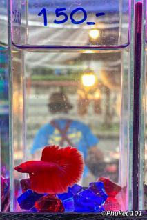 kor-jaan-night-market-fighter-fish