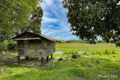 koh-yao-noi-rice-fields-1