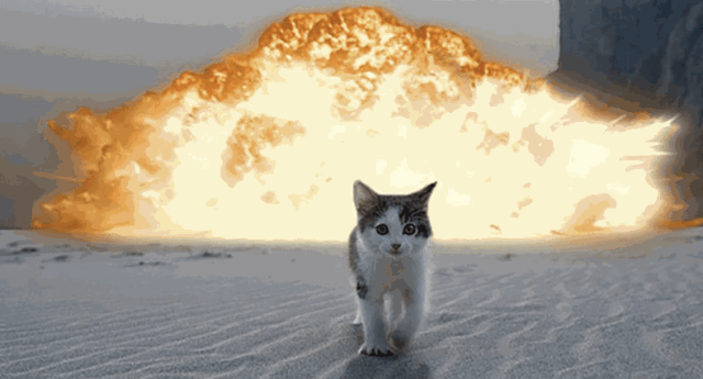 kitten walking from explosion