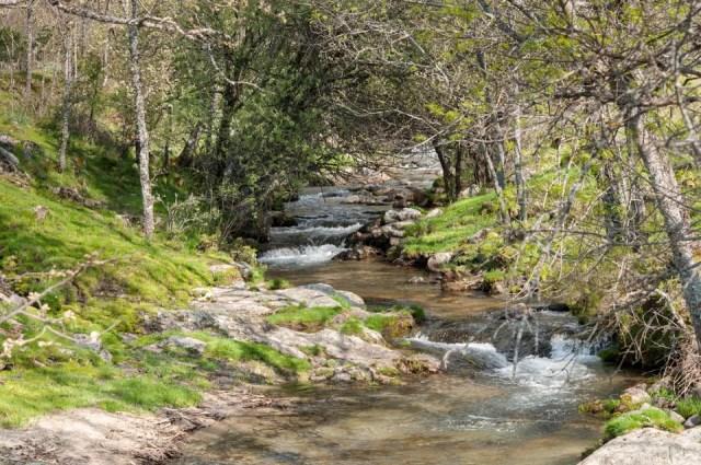 bosque de rascafría sierra de madrid