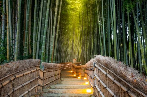 Fascinante bosque de bambu em Quioto, Japão.