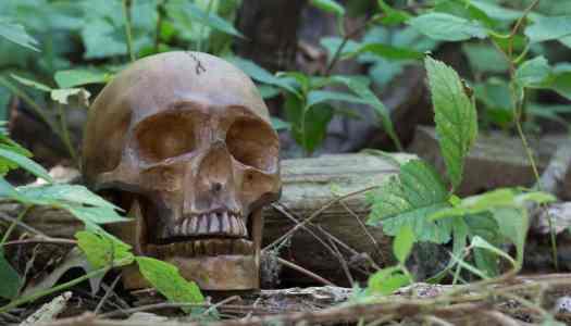 Skulls Found in Western Missouri Woodlands