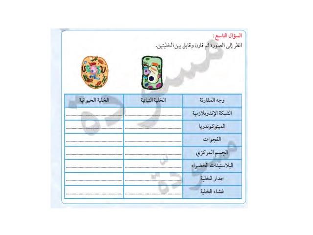 الخلايا تشابهه واختلاف By Maram Adnan Educational Games For Kids