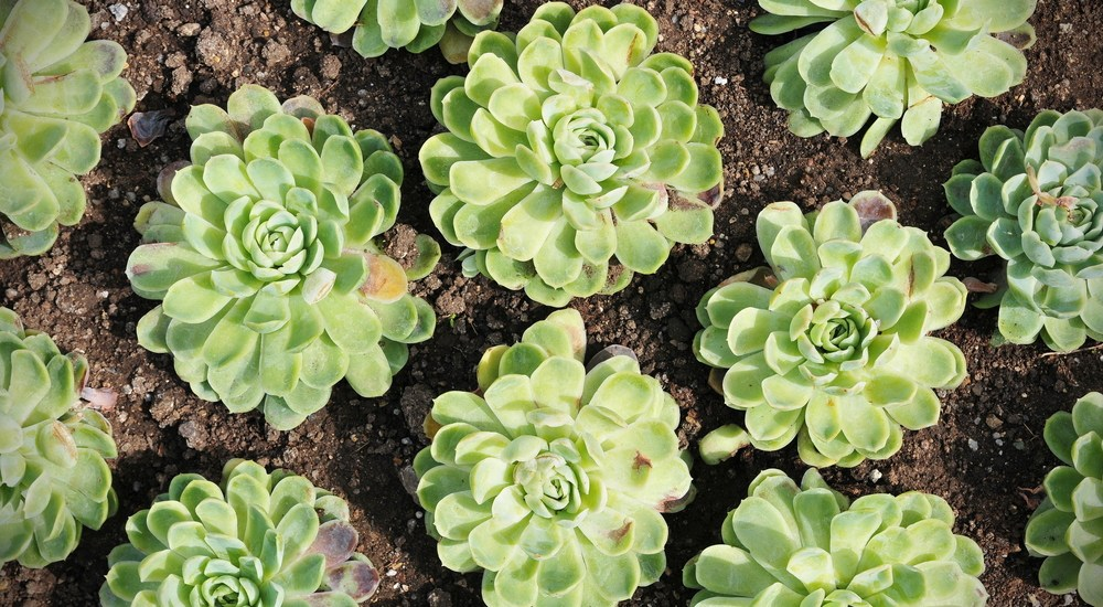 Transplant_Yourself_for_Growth_Robert_Rose_contentadvisory.net_plant_succulent