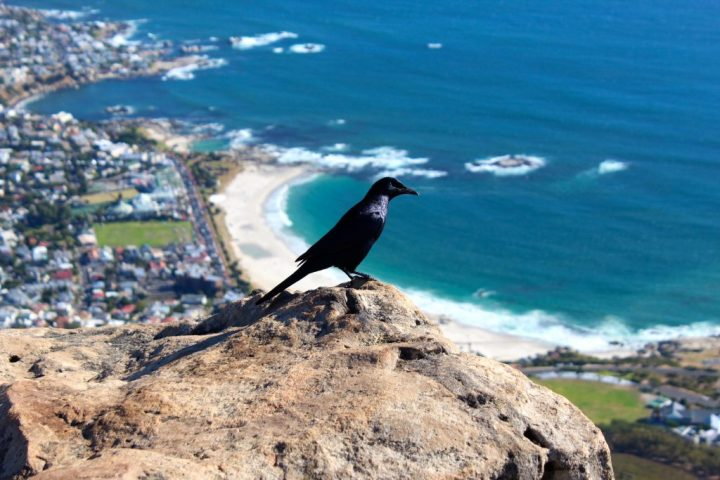 Bird on Lion's Head