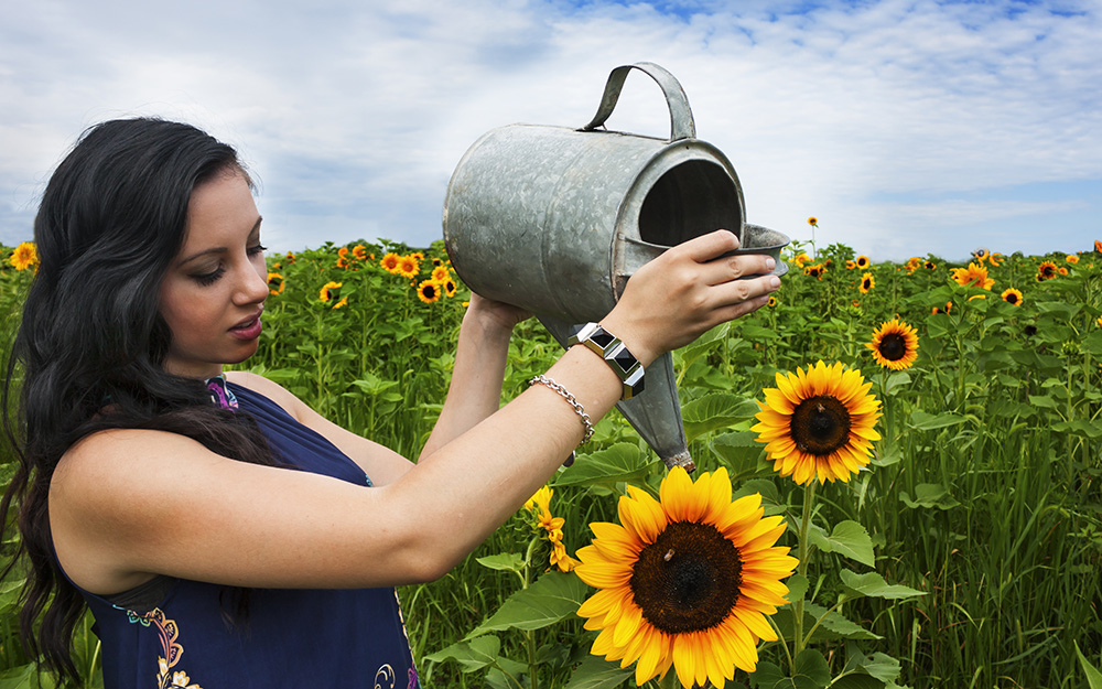 How To Grow Sunflowers The Home Depot