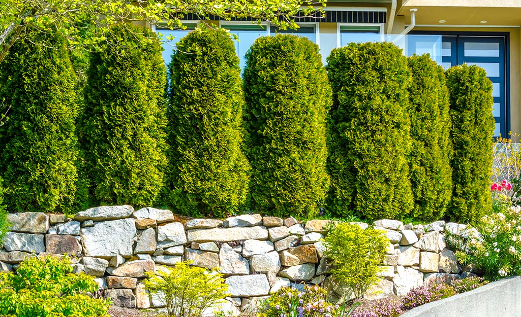 Privacy Fence Ideas The Home Depot