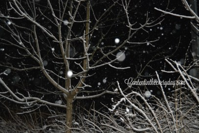 Snow falling and a snow covered tree