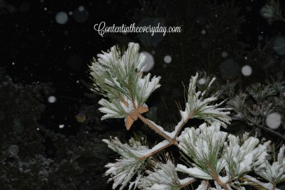 snow covered pinecone