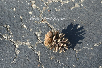 A Pinecone and its shadow