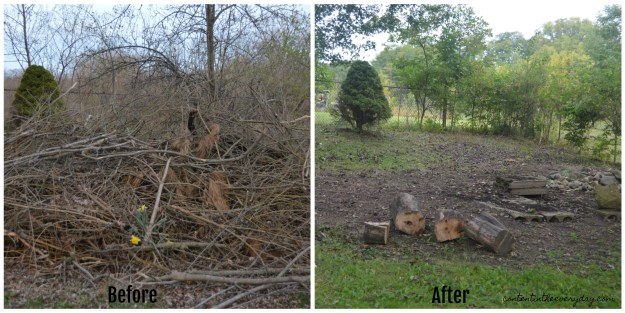 Beaver Dam Before and After