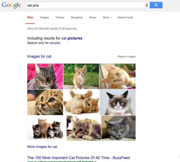 cat-pictures-4
