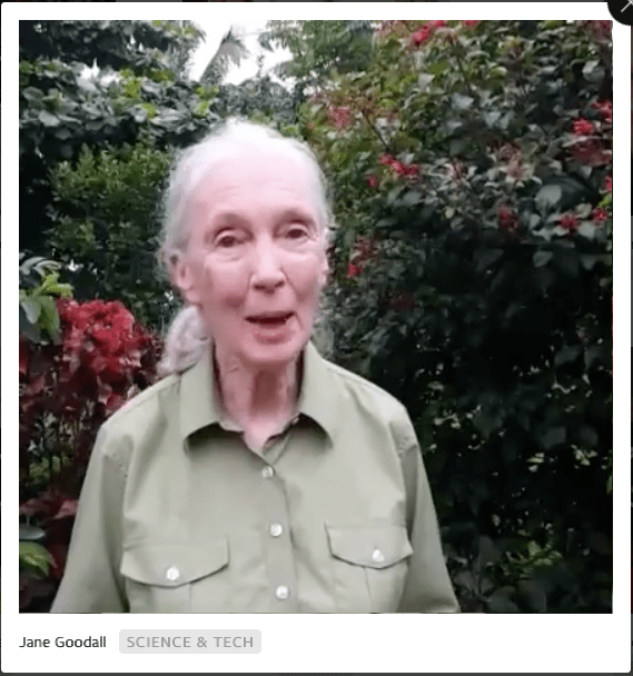 Facebook live video jane goodall