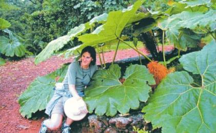 Costa Rica Poor Woman's Umbrella