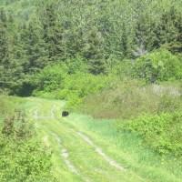 Le tour de la Gaspésie en auto-stop