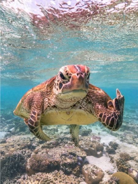 turtle - Mark Fitzpatrick/Comedy Wildlife Photo Awards 2020 - Mark Fitzpatrick/Comedy Wildlife Photo Awards 2020