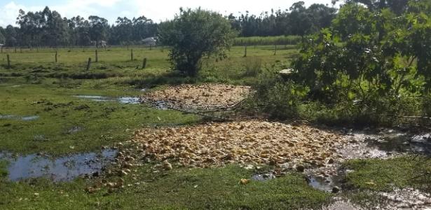 lixao de cascas de maracuja no rio grande do sul 1541520483800 615x300 - No ensino médio, jovem cria plástico com casca de maracujá e leva prêmios