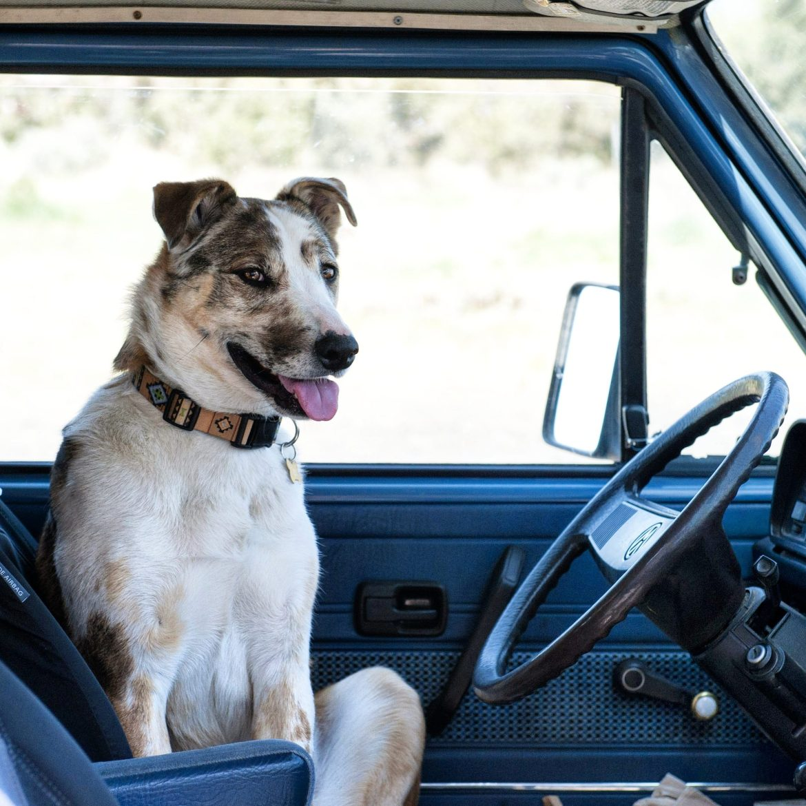Dog in front seat of Vanagon