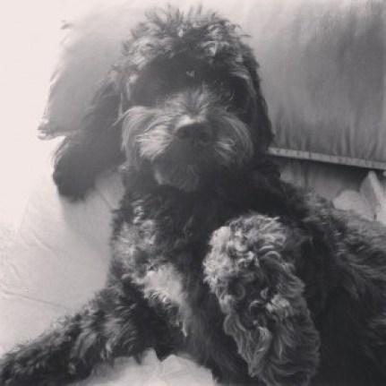 Norah_Minha Cachorrinha