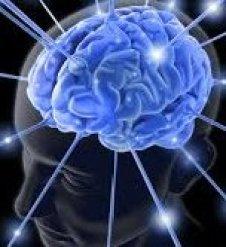 cerebrales