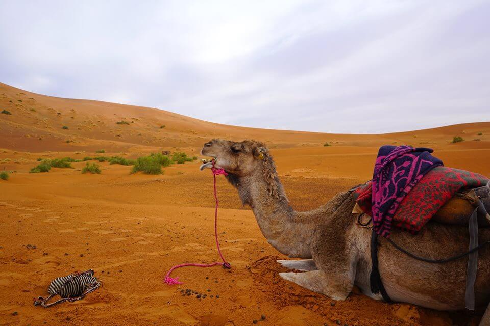 Deserto de Merzouga: até ao Saara pela rota das caravanas
