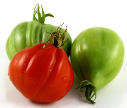 Albenga Tomato