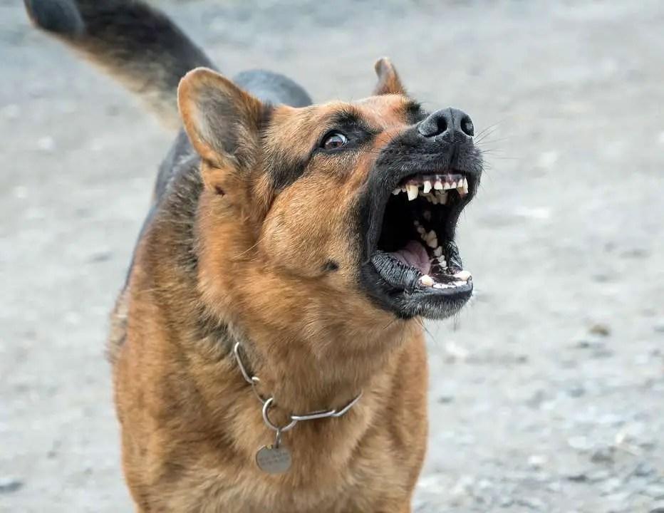 chien en balade