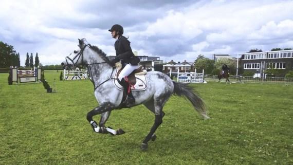 CSO cheval gris