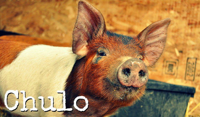 Meet_Chulo