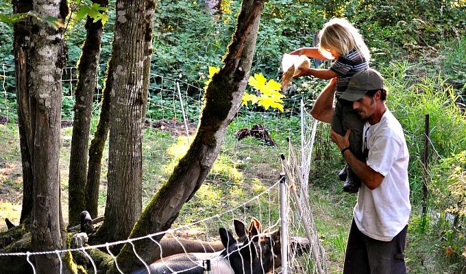 Jasper Feeding The Pigs