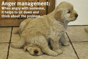 dog_sits_on_dog
