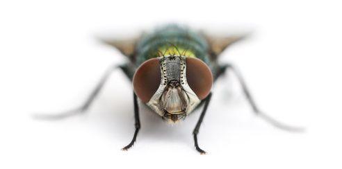 Imagen de una mosca