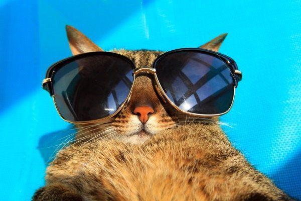 Gato tumbado al sol con