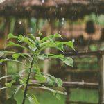 A Rainy Spring Playlist