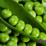 guisantes,  legumbres y candidiasis