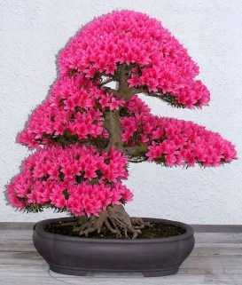 Creative Bonsai Trees Gardening Ideas For Backyard 01
