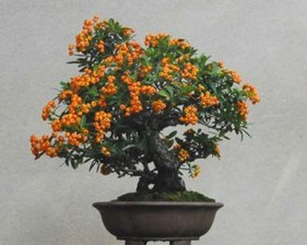 Creative Bonsai Trees Gardening Ideas For Backyard 08
