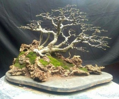 Creative Bonsai Trees Gardening Ideas For Backyard 10