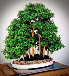 Creative Bonsai Trees Gardening Ideas For Backyard 15