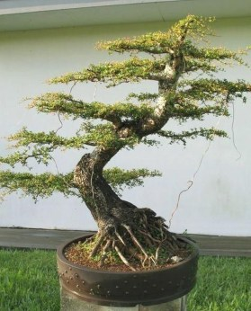 Creative Bonsai Trees Gardening Ideas For Backyard 27