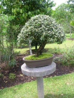Creative Bonsai Trees Gardening Ideas For Backyard 29