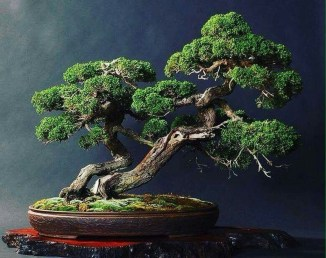 Creative Bonsai Trees Gardening Ideas For Backyard 32
