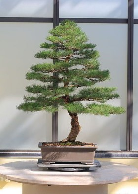 Creative Bonsai Trees Gardening Ideas For Backyard 36