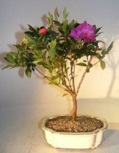 Creative Bonsai Trees Gardening Ideas For Backyard 42